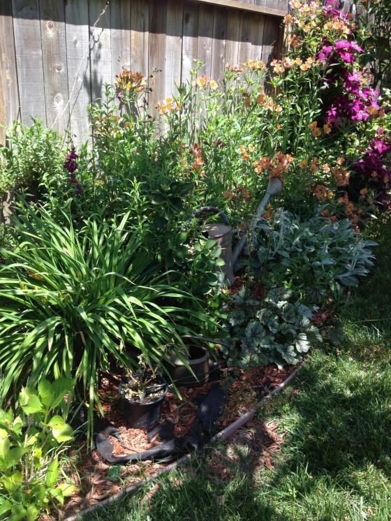 Cheryl's Garden