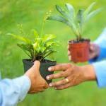 Plant Sharing